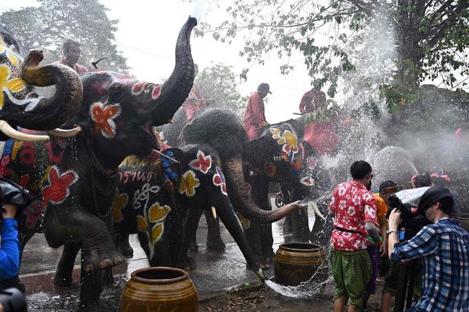 Le nombre d'éléphants en Thaïlande a diminué de plus de 100.000 en 1850 à environ 2700 aujourd'hui.