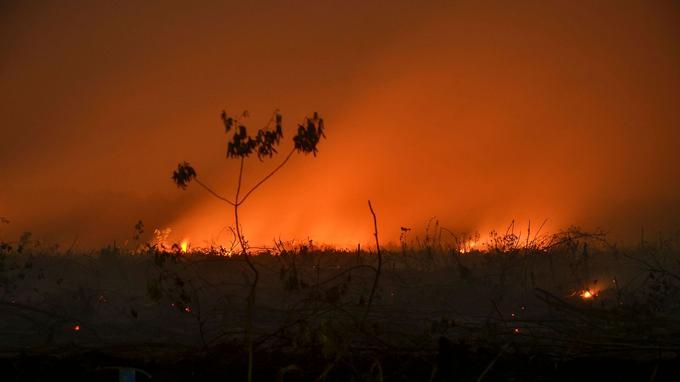 La province de Riau, une préfecture indonésienne, croulait sous les flammes ce lundi 9 septembre.
