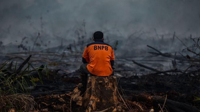 Un soldat du feu indonésien constatait les dégâts conséquents d'un feu de forêt dans la province de Riau lundi 9 septembre.