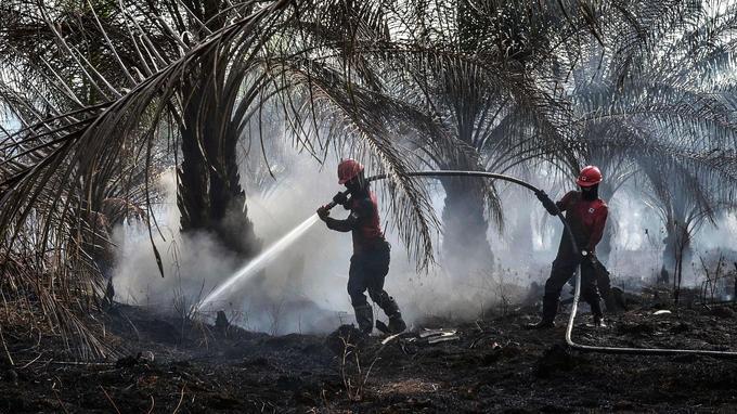 Des pompiers tentaient de lutter contre des feux qui touchaient une exploitation d'huile de palme le 4 septembre dernier.