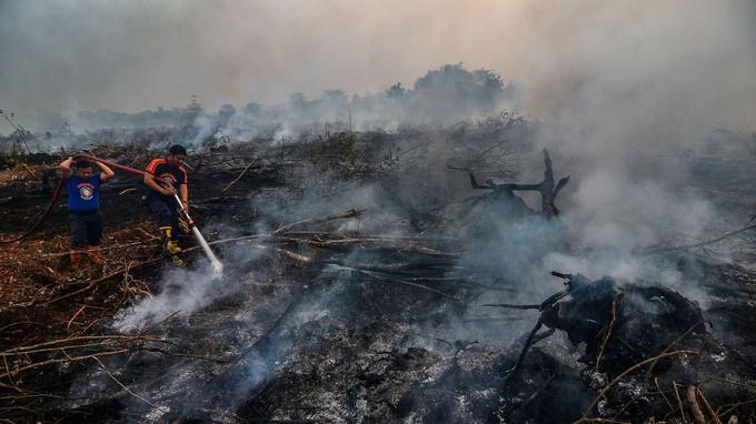 De nombreux pompiers indonésiens tentaient de lutter contre les feux de forêt, ce lundi 9 septembre.