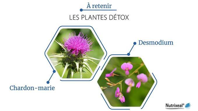 Chardon-marie et Desmodium sont les plantes nutraceutiques phares pour soutenir les fonctions de détoxification de l'organisme.