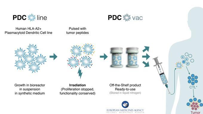 PDC*Line Pharma: une nouvelle classe d'immunothérapie contre le cancer