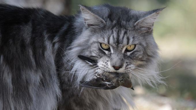 serré chatte européenne grosse lèvre Dick Sucker