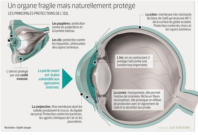 Les principales protections de l'œil