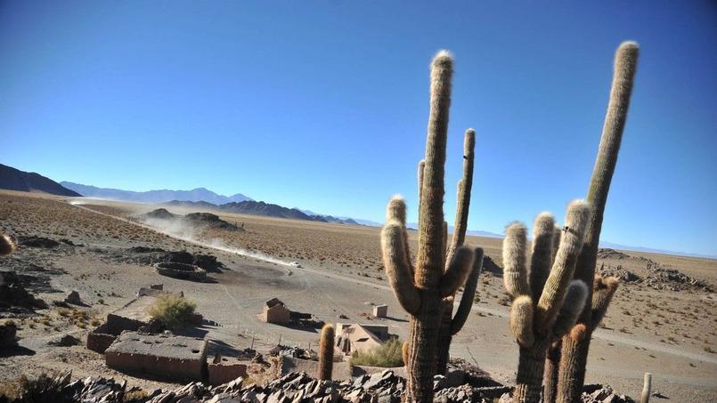 Les cardones, ces cactus géants qui peuplent les montagnes du nord de l'Argentine, sont protégés par le gouvernement. CC Desertours.