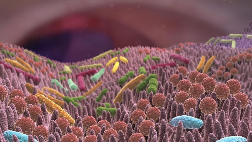 Le microbiote intestinal, un espoir pour soigner et prévenir les maladies chroniques