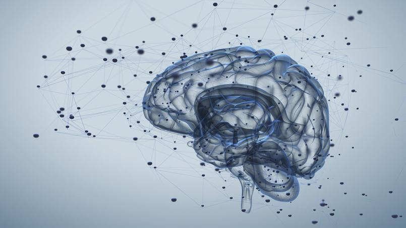 Comment garder son cerveau en forme?