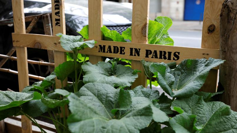 An authorised green area for aromatic herbs, decorative flowers and vegetable, planted by local residents owner of food growing licences delivered by Paris city hall, is seen in a Paris street