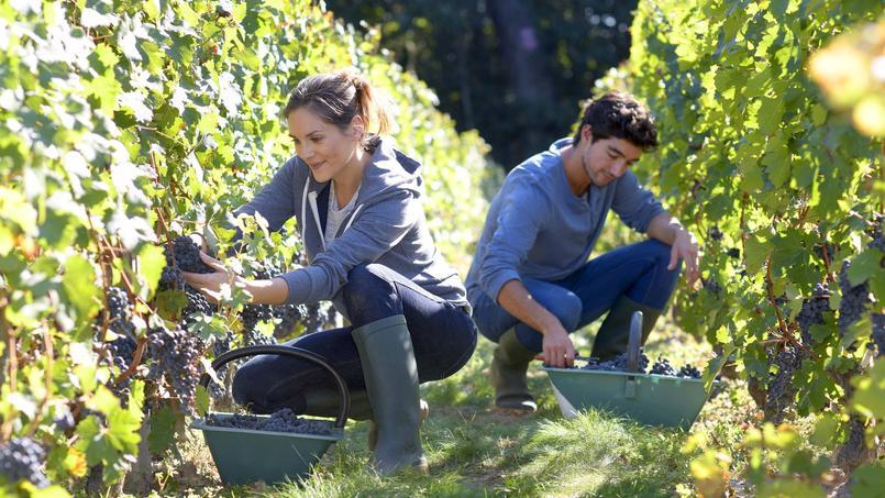 5 jobs saisonniers pour travailler dans l'agriculture même quand on est mineur