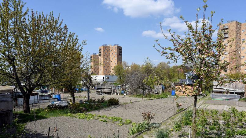 Les jardins ouvriers d'Aubervilliers ont été occupés par des militants écologistes avant d'être évacués début septembre