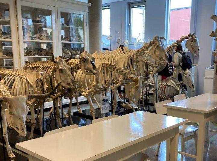 Le Musée des os permet aux élèves d'assimiler plus facilement les notions théoriques.