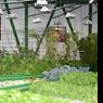 La production de légumes «maison».