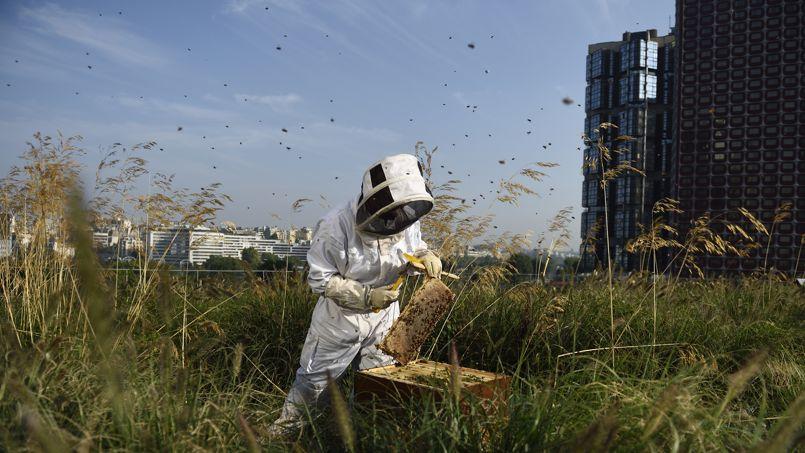 Inauguré fin 2013 à Paris, le centre commercial Beaugrenelle a pris les devants en installant une toiture végétalisée ainsi que des ruches. Crédit: E. Feferberg/AFP