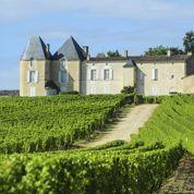 Les vignobles français s'en sortent mieux qu'on le croit