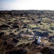 Des hôtels de luxe pourraient bientôt dénaturer les îles Galápagos