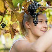 Métiers du vin : une bonne gorgée de passion