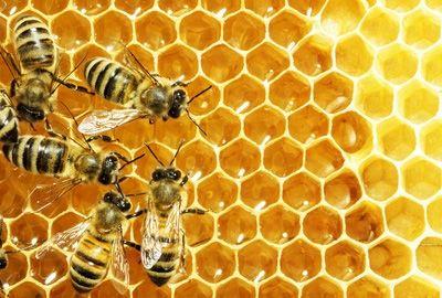 Gelée royale, miel, propolis : leur consommation n'est pas recommandée pour les allergiques au pollen