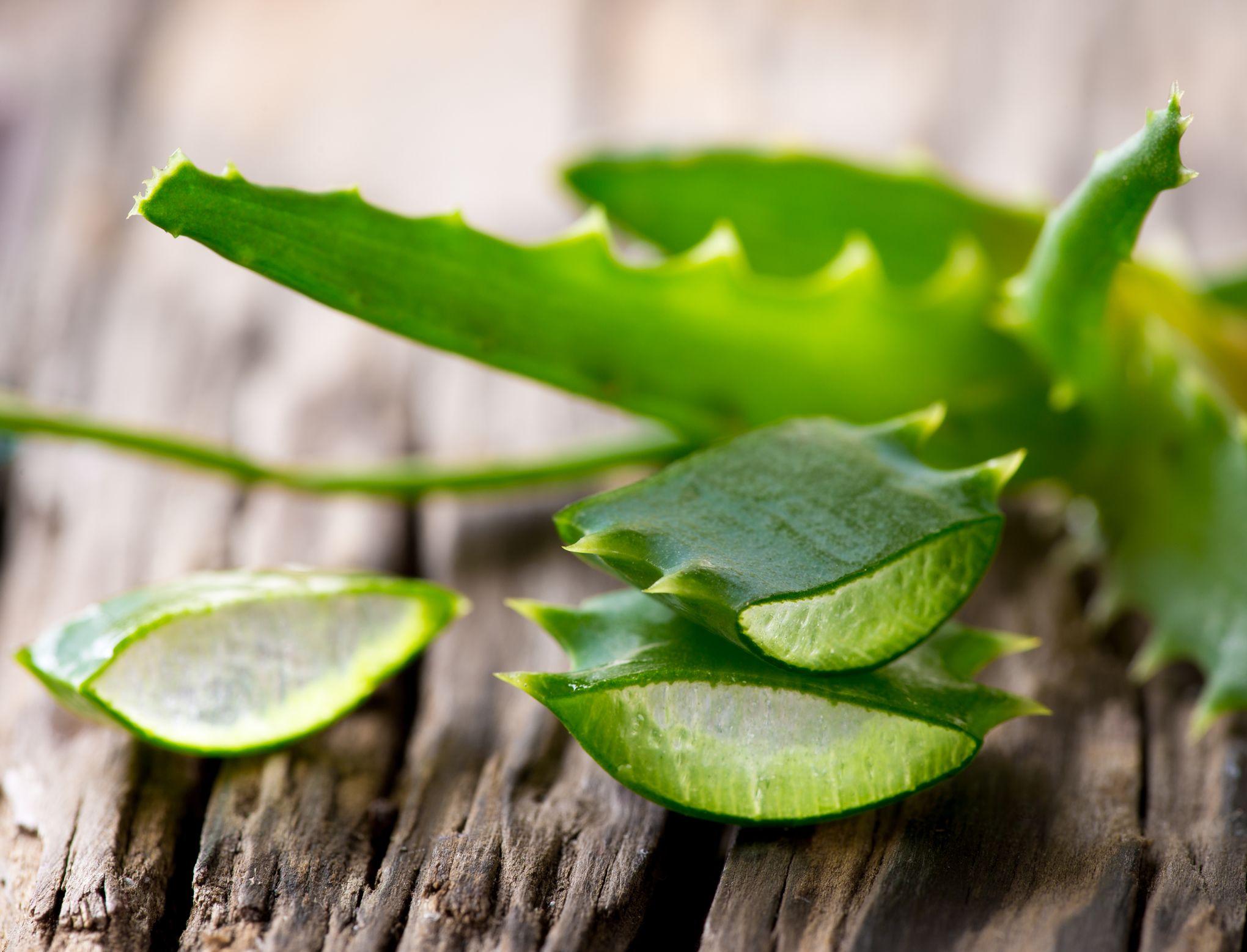 Gare à la consommation de feuilles d'aloe vera