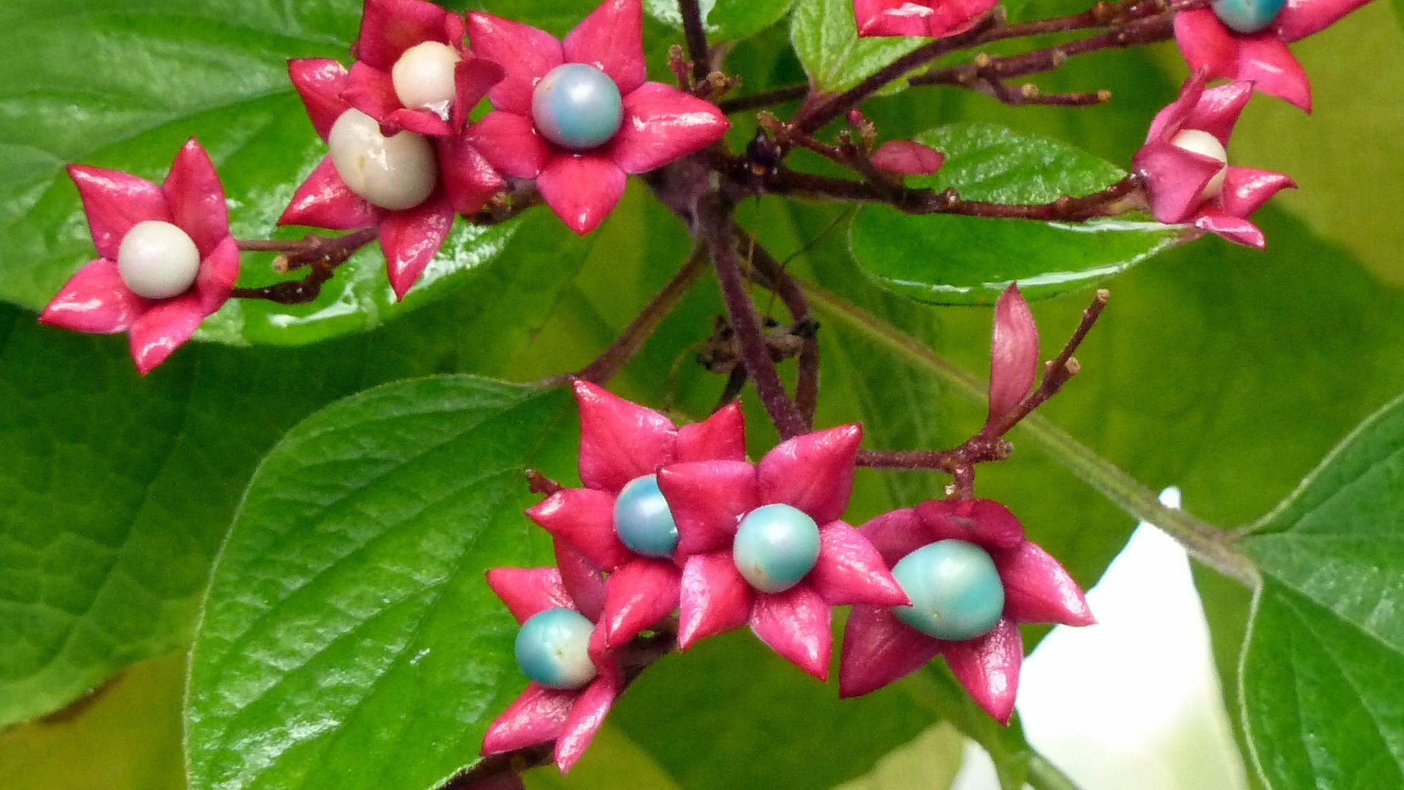 Quelles Fleurs Planter Fin Aout quel arbre planter pour avoir de l'ombre en été?