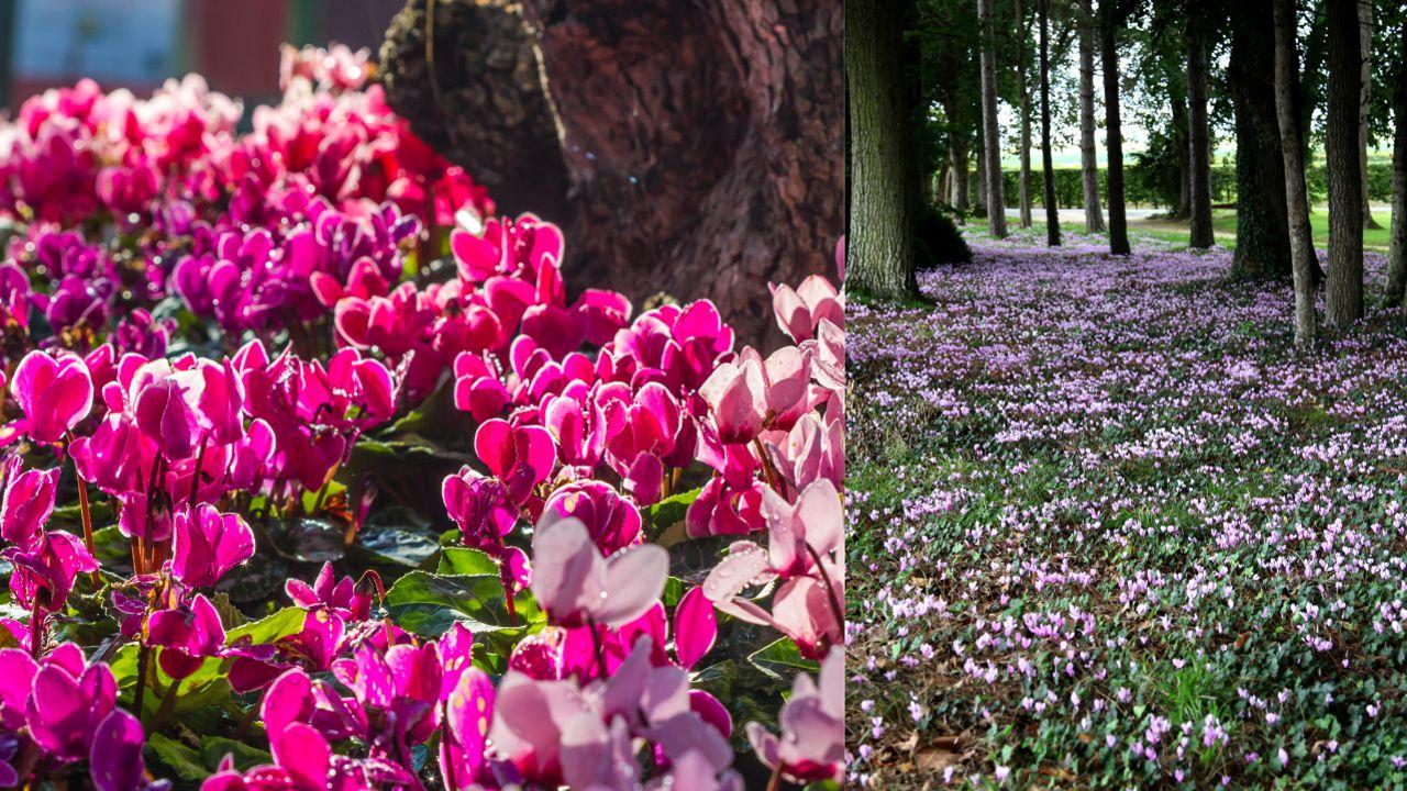 Quelles Fleurs Planter Fin Aout désherber son jardin avec des fleurs