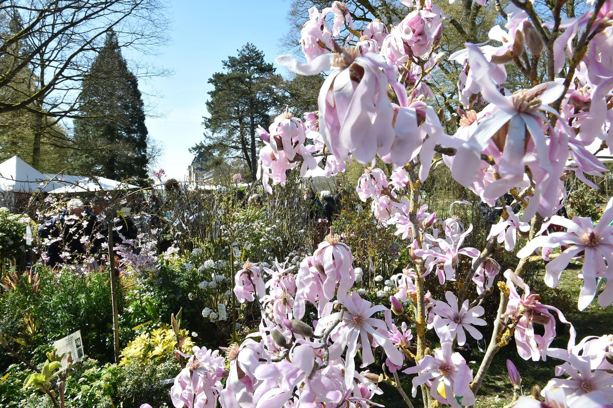 Jardinerie Pas Cher Toulouse jardin: saint-jean-de-beauregard fête ses 35 ans ce week-end
