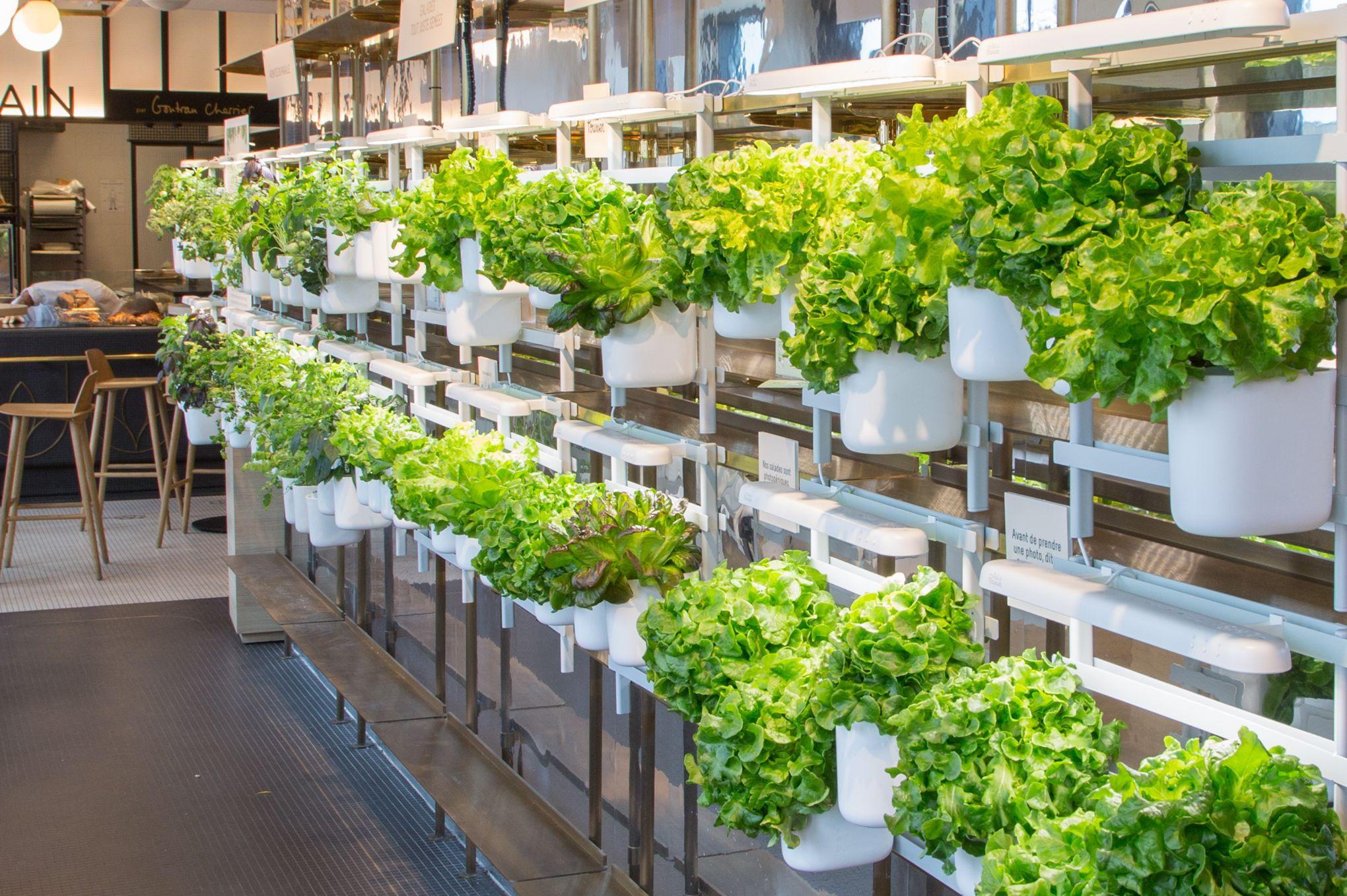 Faire Pousser Du Persil En Appartement modulo, un potager d'intérieur pour faire pousser ses salades