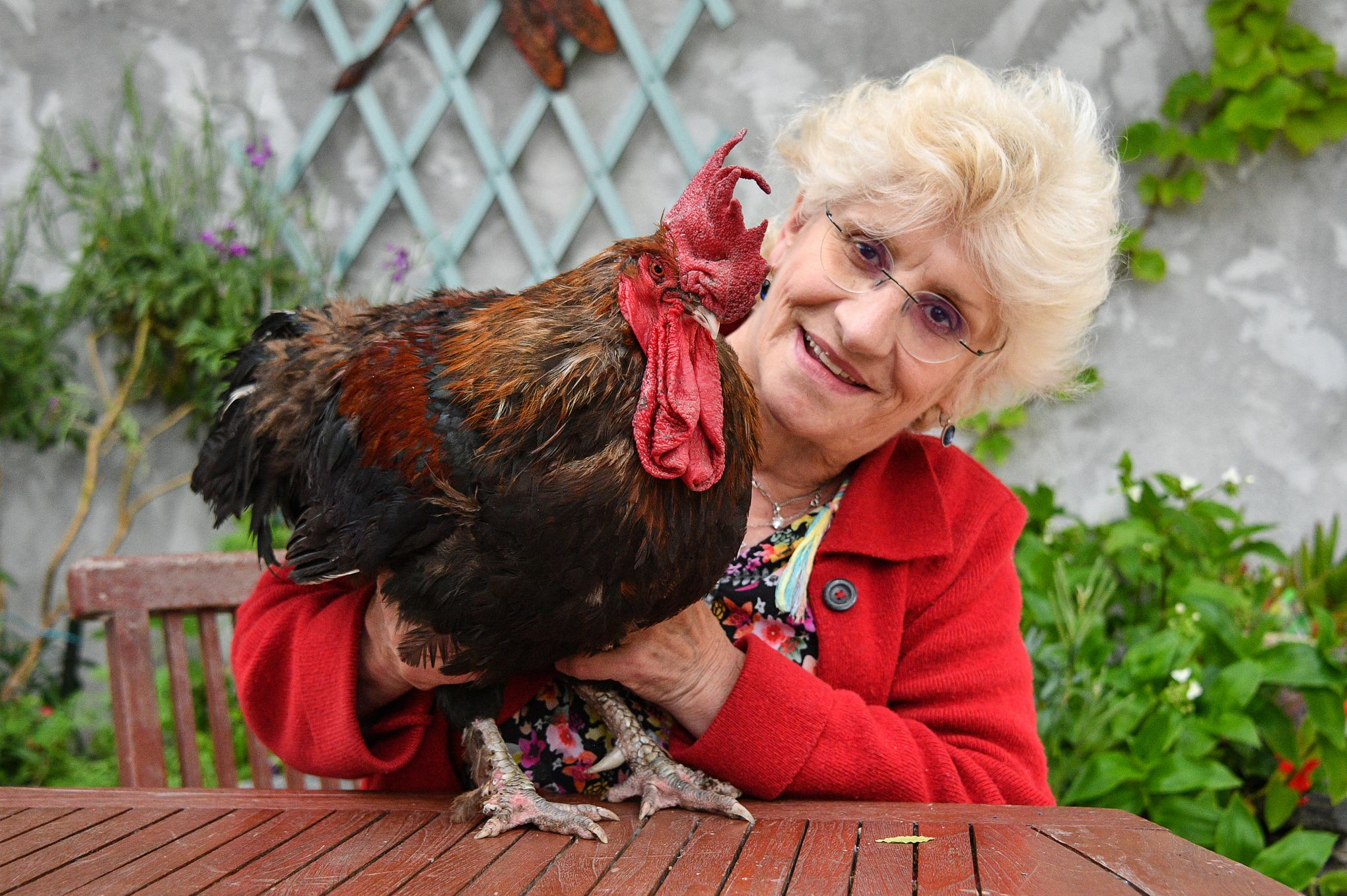 Image result for coq maurice