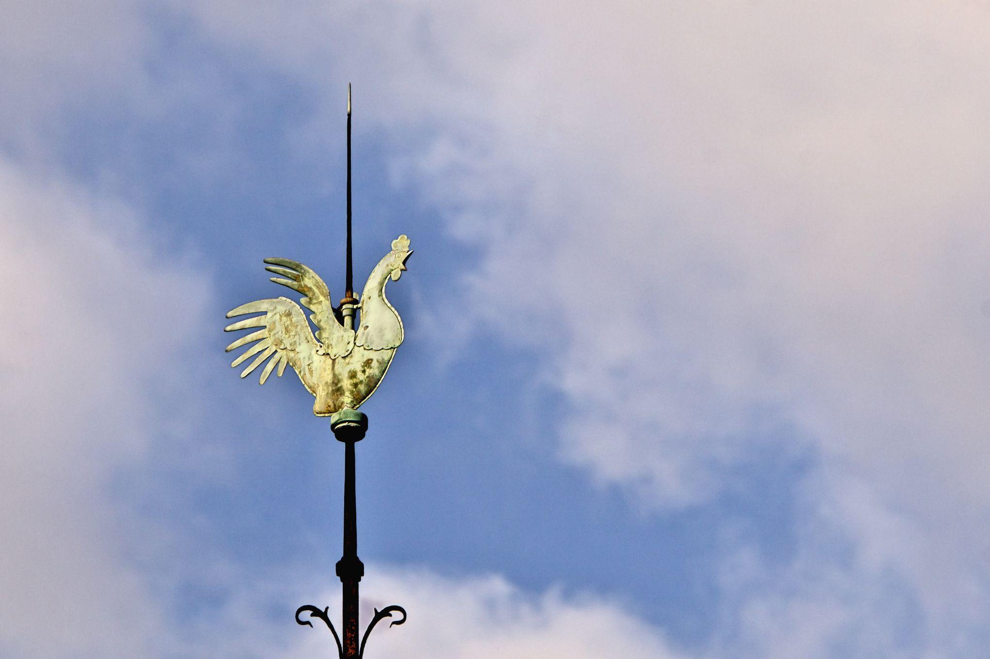 Le coq de Notre-Dame s'expose rue de Valois