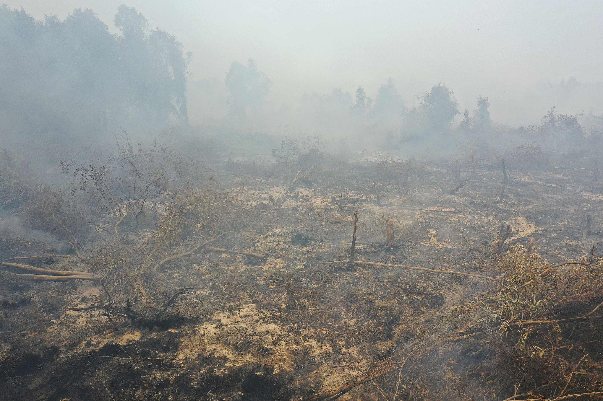 Nuage toxique, orangs-outans menacés: les conséquences des incendies en Indonésie