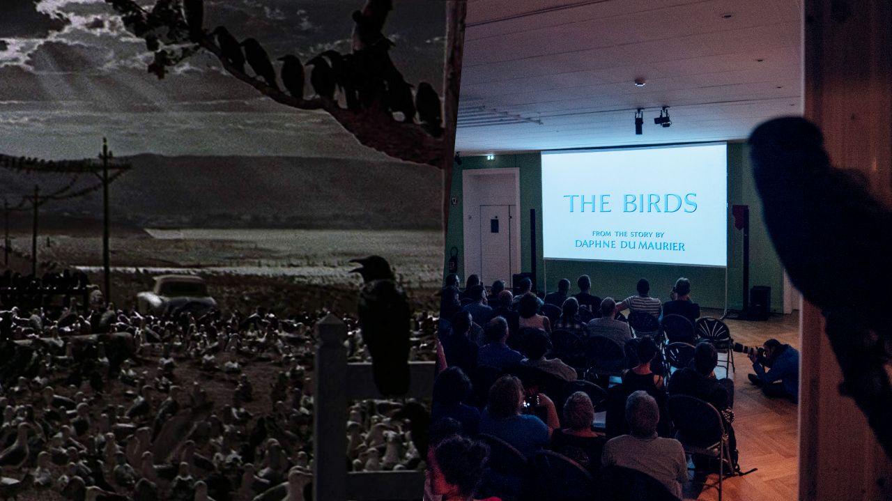 Les oiseaux d'Alfred Hitchcock projeté au milieu de rapaces empaillés