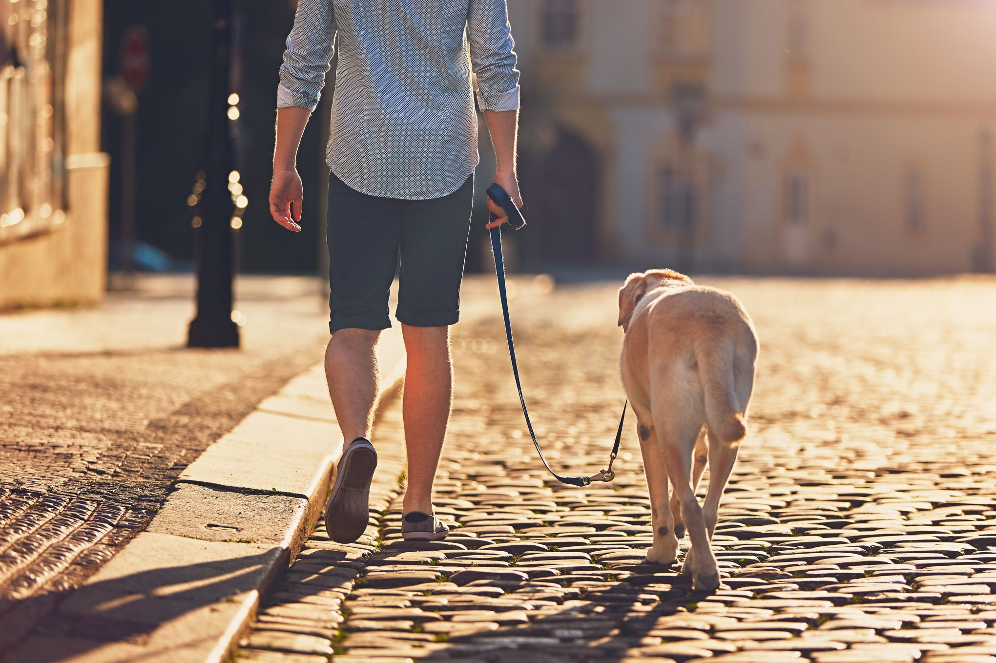Avoir un chien réduit-il vraiment le risque de mourir après un accident cardio-vasculaire?