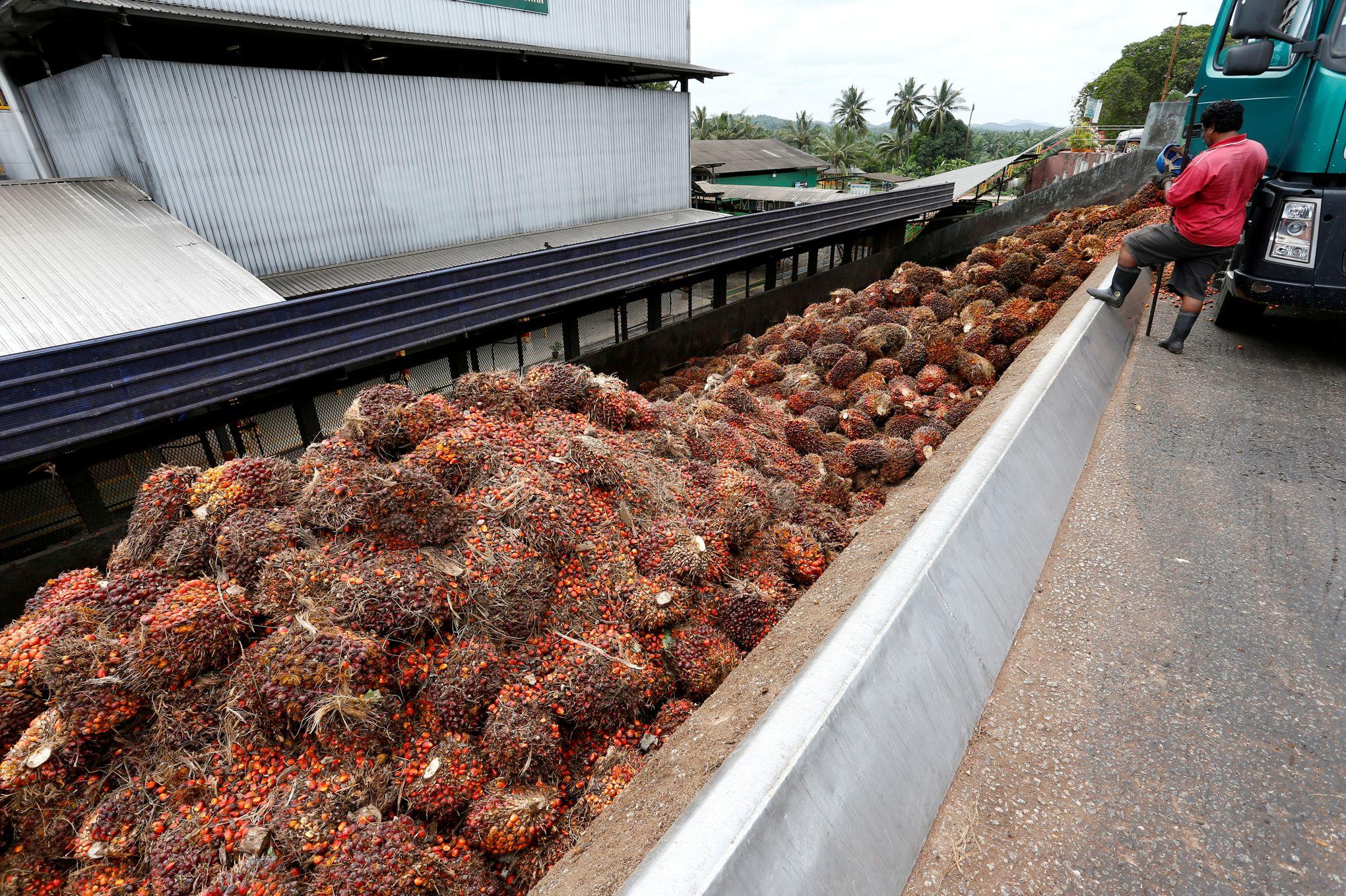 Peut-on vraiment se passer de l'huile de palme?