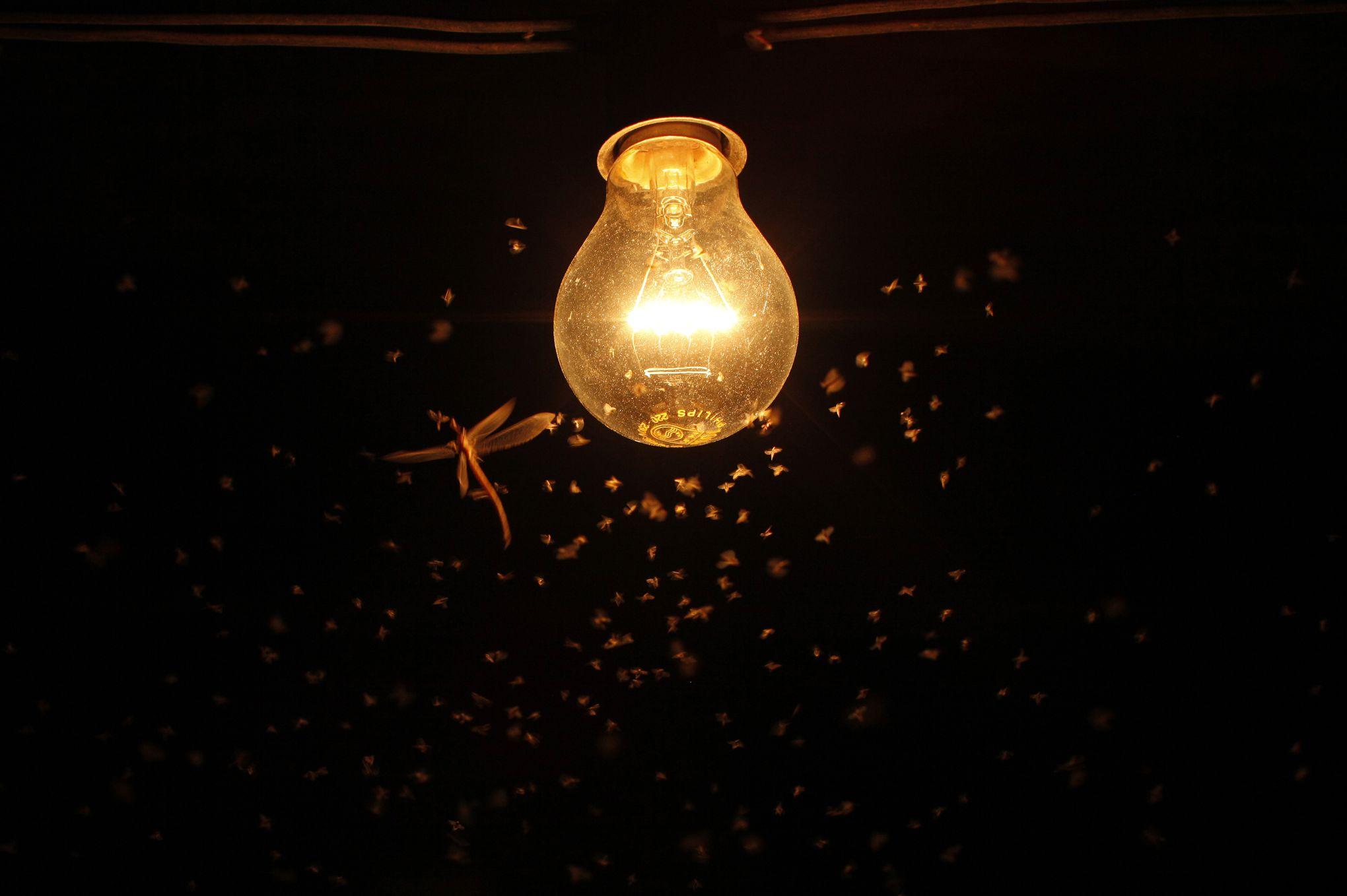 La lumière artificielle, coupable négligé dans la disparition des insectes
