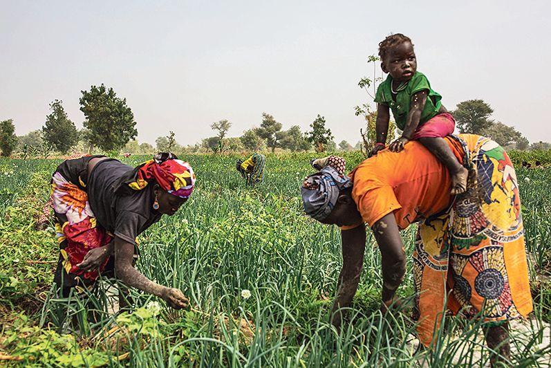 La Clé des Champs, numéro un des fruits et légumes au Gabon