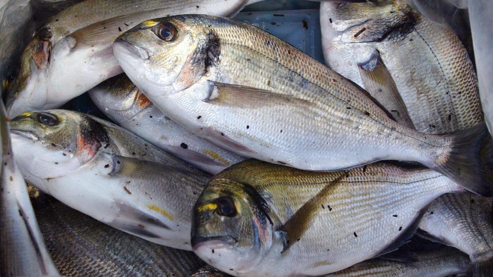 Découvrez les saveurs et la gastronomie des ports français