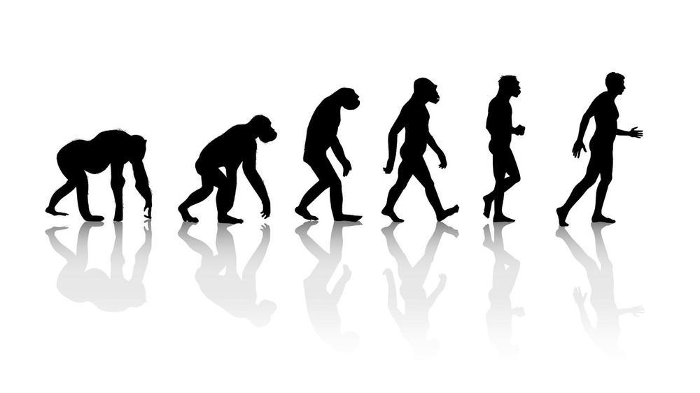 australopithèque-évolution-théorie