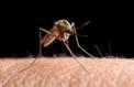 Insectes, parasites : comment protéger sa peau en voyage