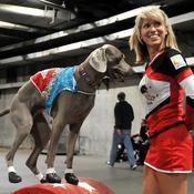 La Sundance Performance Dog Team