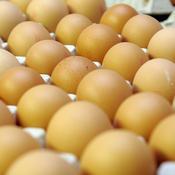 JO 2018 : Par erreur, la Norvège se fait livrer 15.000 œufs