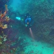 Le capteur O'Dive affaiblit le risque d'accident en plongée sous-marine