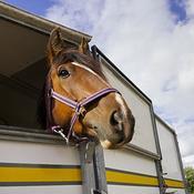 Nouveau coup dur pour l'équitation: toutes les compétitions suspendues suite à une épidémie touchant les chevaux