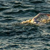 Survivante d'un cancer, une Américaine traverse quatre fois la Manche à la nage