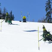 Les sapins skieurs en action
