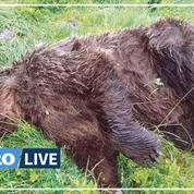 France: une enquête ouverte après la découverte d'un ours abattu en Ariège