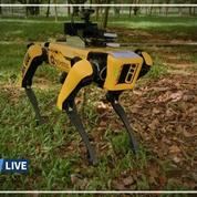 À Singapour, un robot canin pour surveiller la distanciation sociale