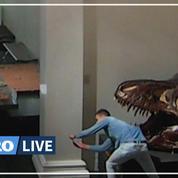 Dans un musée fermé, un intrus fait des selfies avec des crânes de dinosaure