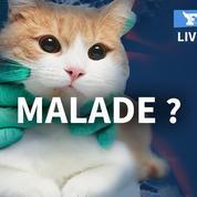 Faut-il s'inquiéter du coronavirus pour nos animaux de compagnie?