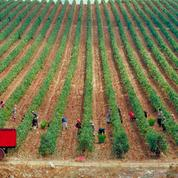 Un vigneron syrien à Vinexpo pour trouver, au milieu de la guerre, des débouchés à ses vins