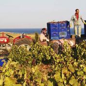 A Bozcaada, le vin turc sous la menace de la loi anti-alcool